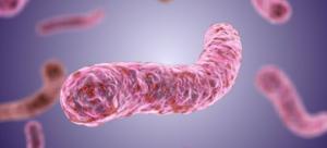 Микобактерия туберкулеза в увеличении