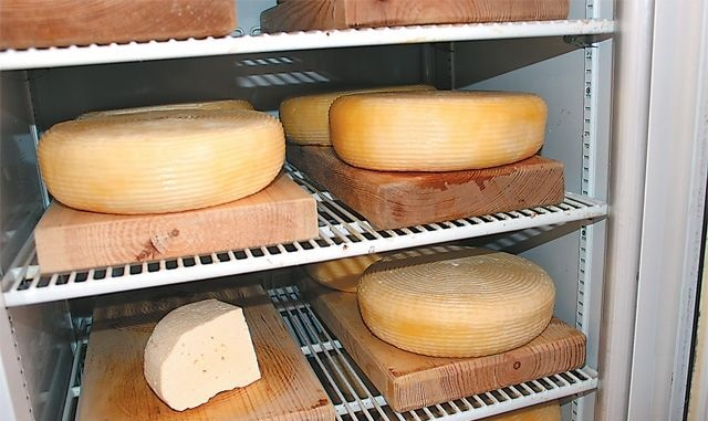 Хранение сыра на производстве