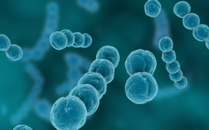 Бактерия стрептококка