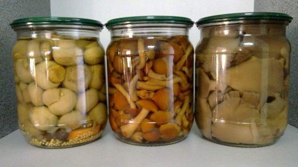 Заготовки с грибами