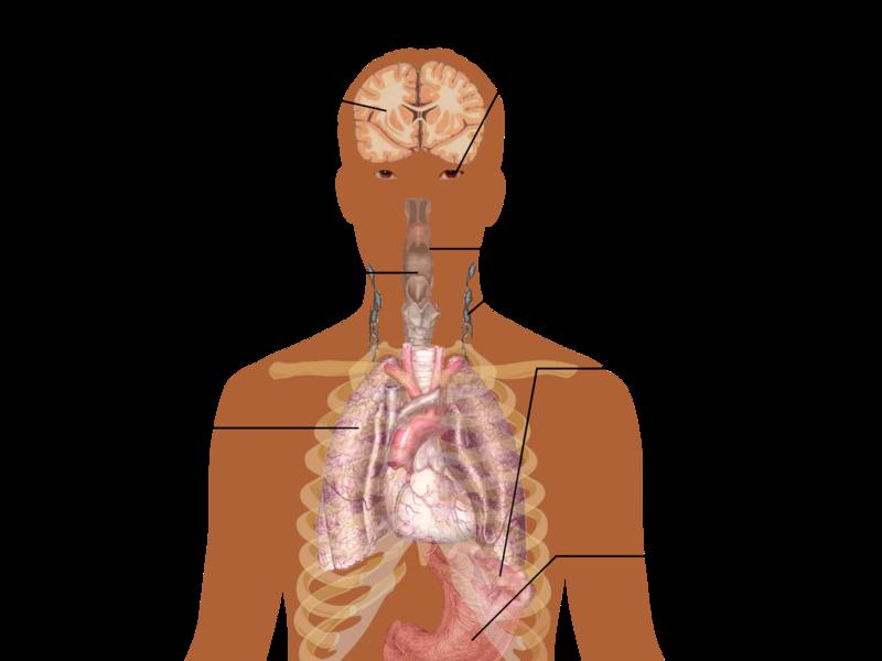 Симпотомы инфекции мононуклеоз