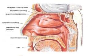 Вазотомия анестезия