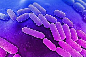 Как диагностировать и лечить клебсиеллу пневмонии