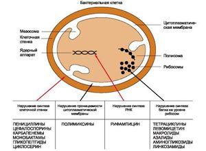 Действие антибиотиков на микроорганизмы